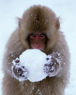 monkey_and_snowball